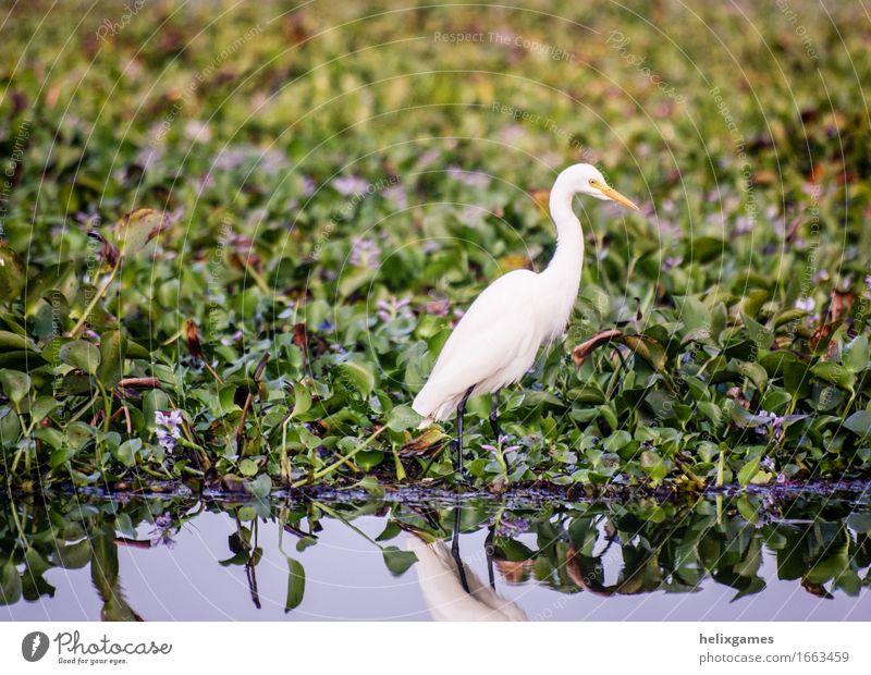 Egret Island Nature Animal Climate Forest Virgin forest Bog Marsh Pond Lake Places Bird Wild Backwaters Kerala animals Asia Beauty Photography India sunny