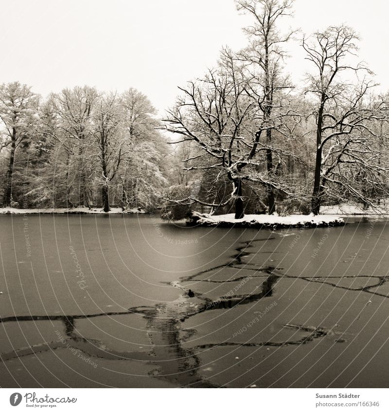 Sky Winter Forest Cold Snow Meadow Lake Park Ice Coast Weather Trip Frost Swimming pool Kitsch Branch