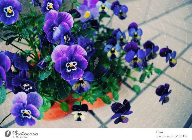Nature Flower Green Blue Plant Yellow Blossom Gray Stone Violet Natural Tile Blossoming Fragrance Seam Clay