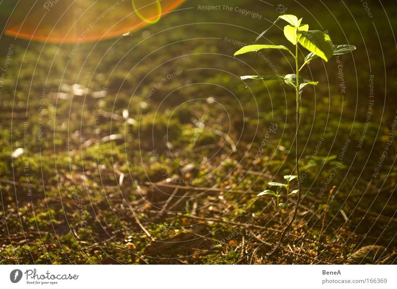 Nature Green Plant Tree Leaf Environment Spring Small Brown Earth Energy industry Growth Illuminate Idyll Thin Moss