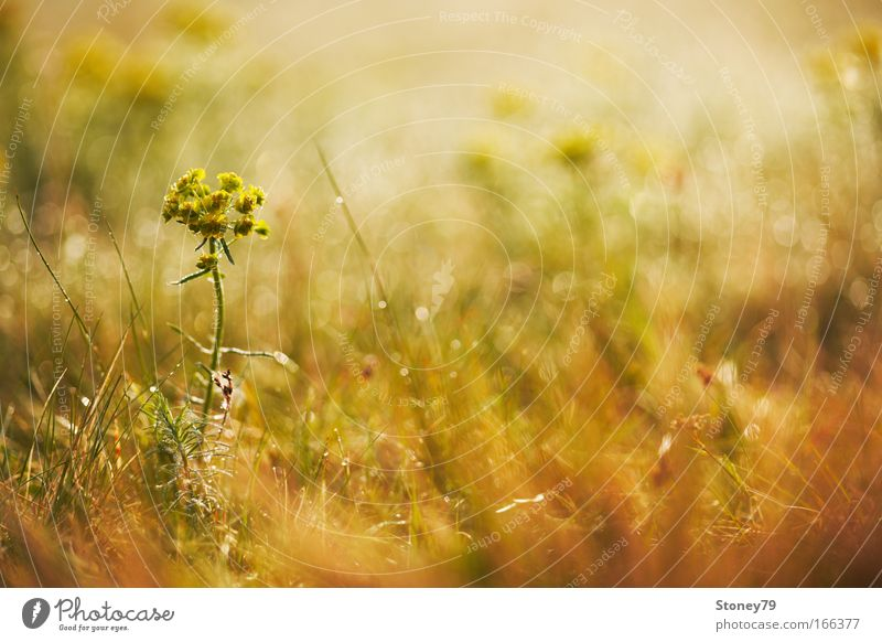 Nature Flower Plant Yellow Meadow Blossom Grass Spring Warmth Moody Brown Gold Warm-heartedness Idyll Blossoming Illuminate