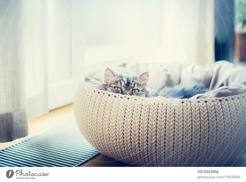 Sweet funny cat in cat basket Lifestyle Living or residing Flat (apartment) Room Animal Pet Cat 1 Soft Design Basket Hunting Window Looking into the camera