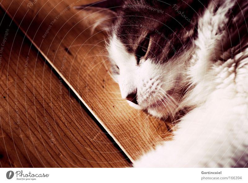 Cat White Animal Black Calm Eyes Gray Dream Moody Contentment Lie Sleep Ground Soft Pelt Animal face