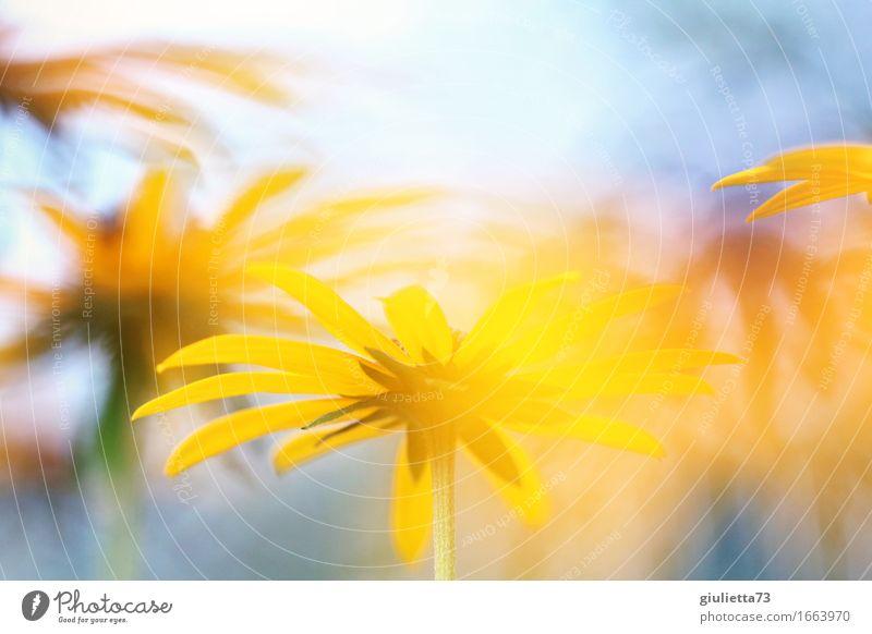 Nature Plant Beautiful Summer Sun Flower Yellow Happy Garden Dream Contentment Future Joie de vivre (Vitality) Beautiful weather Warm-heartedness Hope