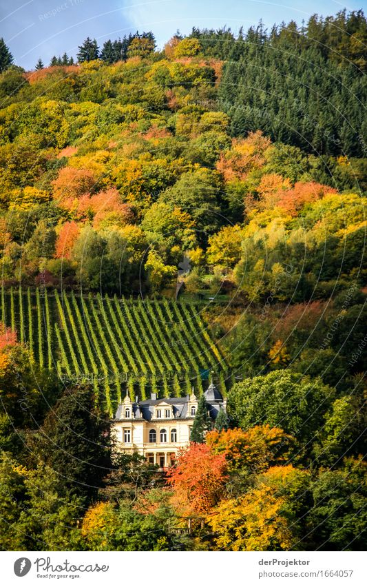 Castle with a lot of autumn Vacation & Travel Tourism Trip Adventure Far-off places Freedom Mountain Hiking Environment Nature Landscape Autumn