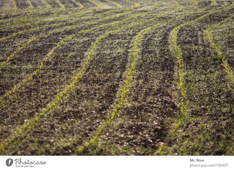 Nature Plant Line Brown Field Earth Growth Tracks Agriculture Ecological Furrow Organic farming Warped Sowing Seeds