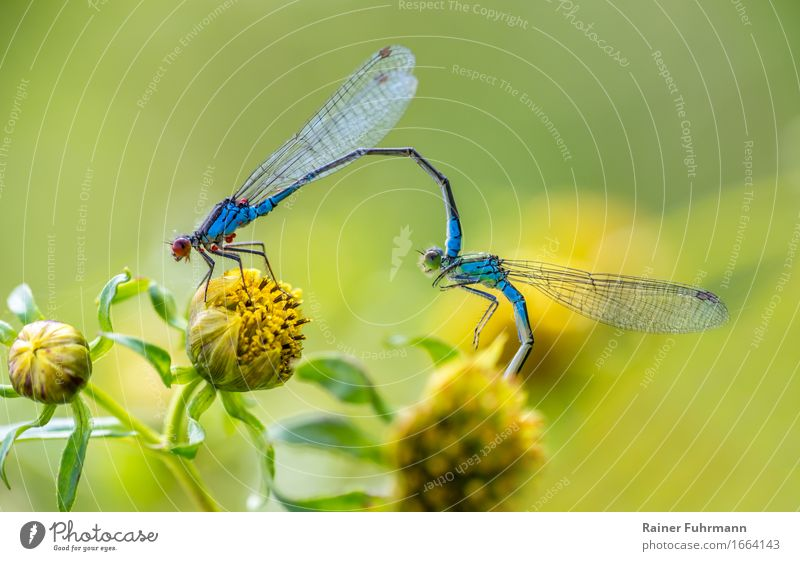 Nature Animal Environment Wild animal Dragonfly