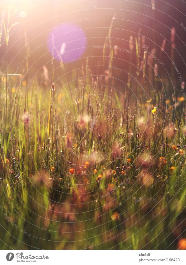 evening meadow Colour photo Multicoloured Exterior shot Deserted Copy Space top Evening Twilight Light Light (Natural Phenomenon) Sunlight Sunbeam Sunrise
