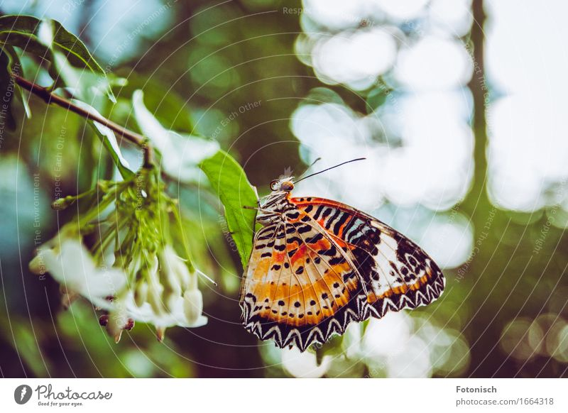butterfly Nature Virgin forest Butterfly 1 Animal Sit Feeler Eyes Trunk Wing Orange Spotted Colour photo Exterior shot Close-up Copy Space top Light Full-length