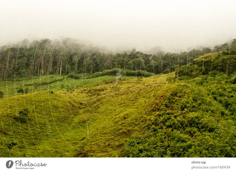 Rainforest deforestation Colour photo Exterior shot Deserted Copy Space top Copy Space bottom Morning Day Long shot Panorama (View) Environment Nature Plant