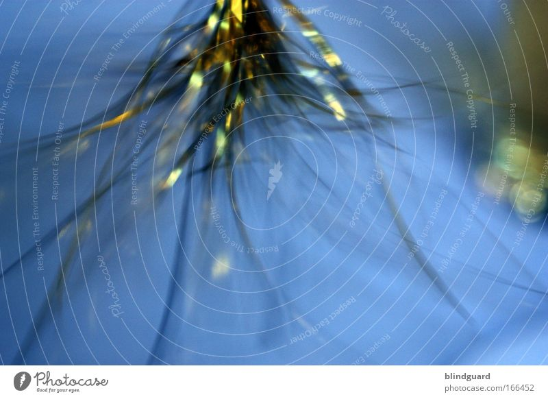 Glitter In Motion Colour photo Interior shot Experimental Abstract Copy Space bottom Artificial light Long shot Joy Playing Restaurant Feasts & Celebrations