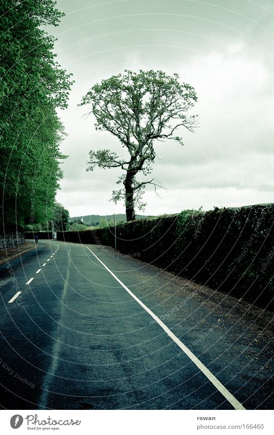 free ride Colour photo Subdued colour Central perspective Motoring Street Dark Cold Empty Free Freedom Tree Treetop Asphalt Ireland Driving Transport