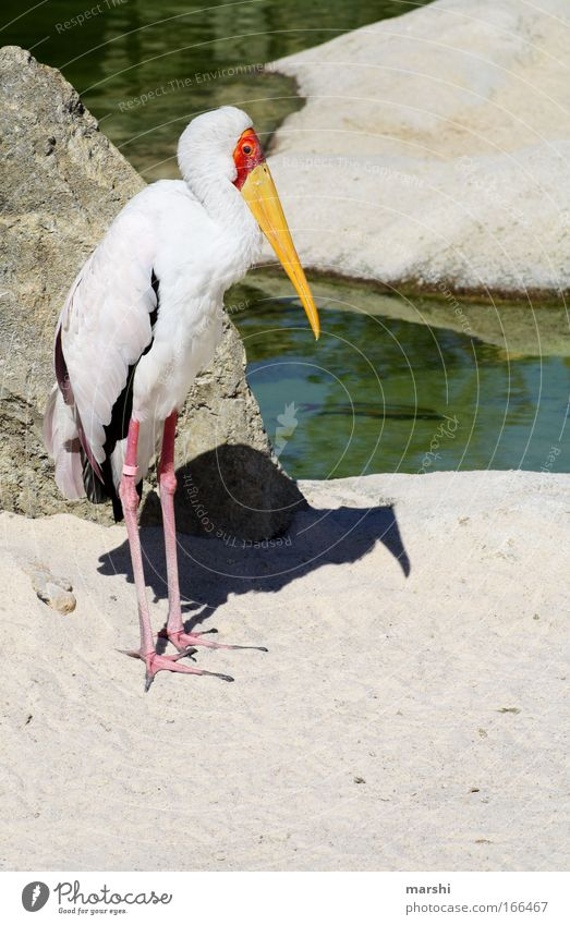 insatiable appetite Colour photo Exterior shot Deserted Nature Landscape Sand Park Animal Wild animal Bird Wing 1 Yellow Red Black Zoo Feather Watchfulness
