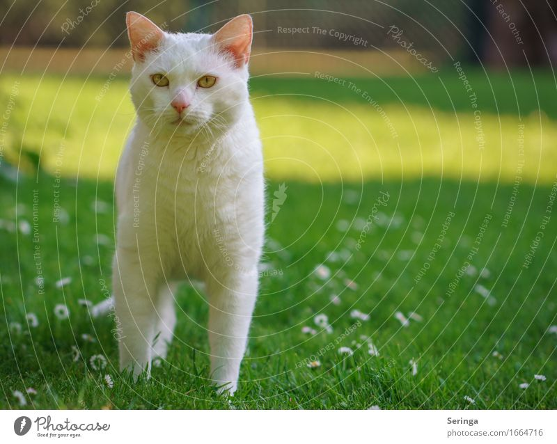 Cat Plant Beautiful Animal Baby animal Spring Meadow Park Speed Sweet Pelt Pet Animal face Smart Claw Animal tracks