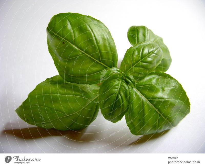 Basil / Basil Italy Herbs and spices Cooking Kitchen Italien pesto Green Leaf Nutrition Vegetable Vegetarian diet herbs