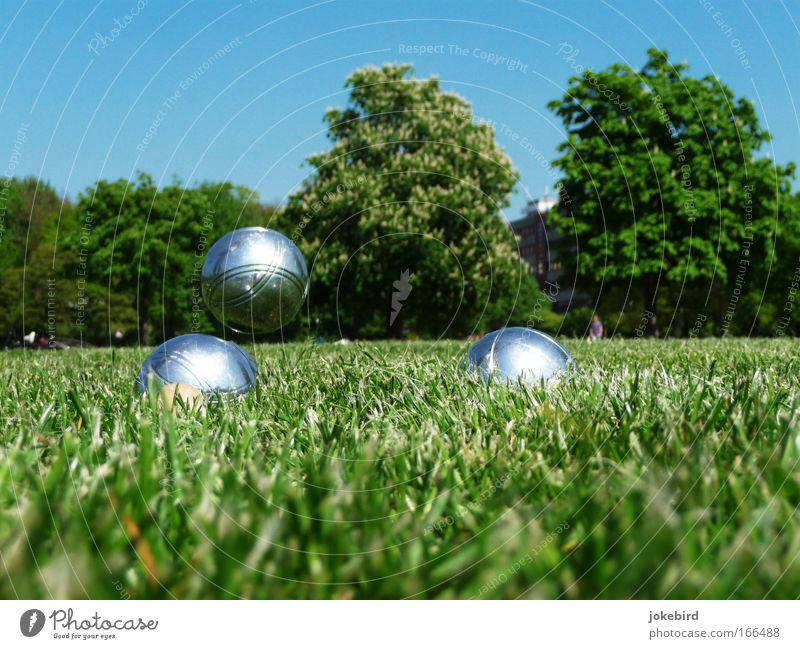 A park Leisure and hobbies Playing Garden Boules Sky Cloudless sky Sunlight Beautiful weather Tree Grass Park Meadow Metal Sphere Movement Relaxation Flying