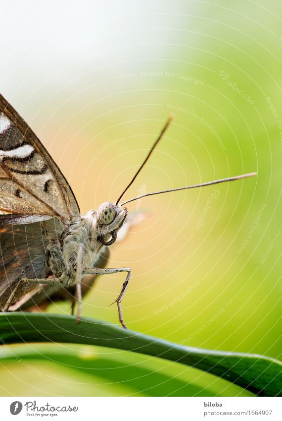 I see something you can't see. Plant Animal Leaf Butterfly 1 Brown Green White Colour photo Exterior shot Copy Space top Shallow depth of field Animal portrait