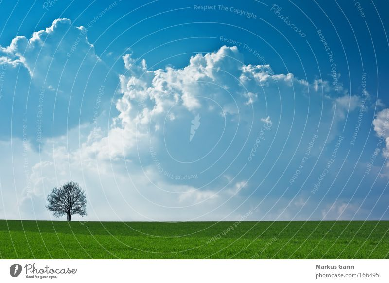 Nature Sky Tree Clouds Loneliness Meadow Death Grass Spring Sadness Landscape Air Field Weather Horizon Hope