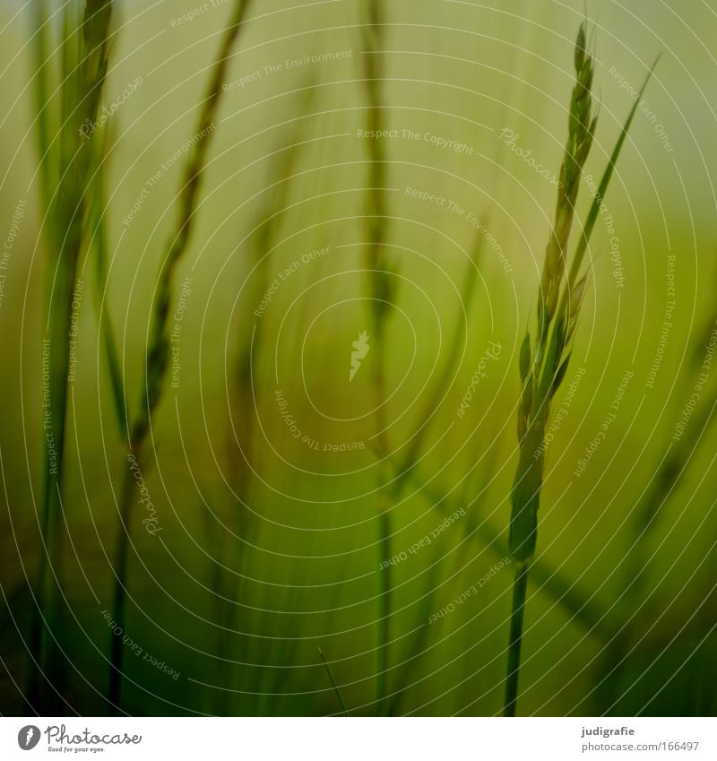 Nature Green Plant Summer Calm Environment Yellow Meadow Grass Growth Uniqueness Idyll Stalk Blade of grass Harmonious Seed