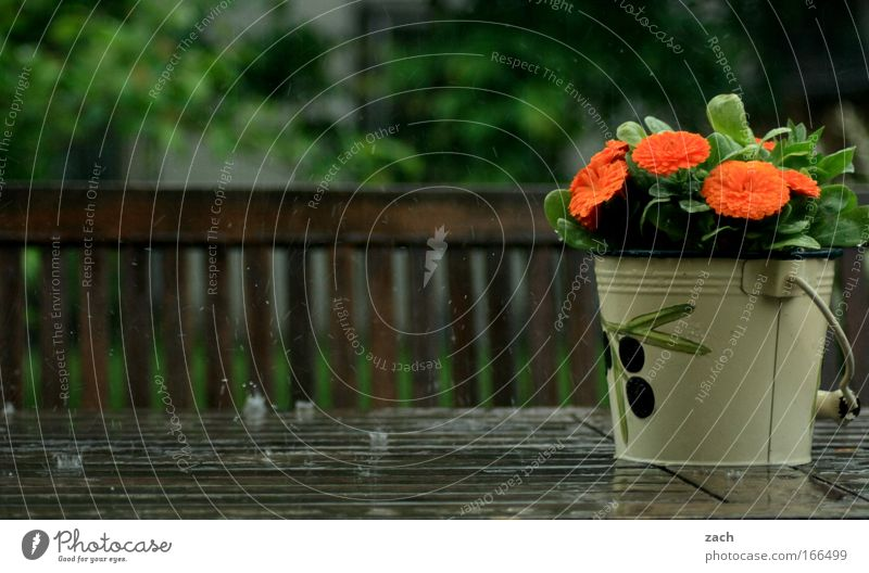 spring rain Colour photo Exterior shot Deserted Copy Space bottom Day Motion blur Central perspective Flat (apartment) House (Residential Structure) Garden