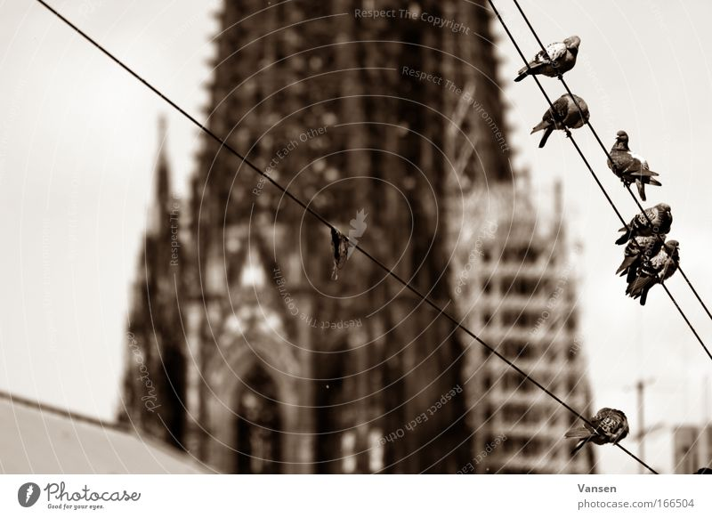 landmarks Black & white photo Exterior shot Deserted Day Deep depth of field Cologne Cathedral Dome Manmade structures Building Architecture Tourist Attraction