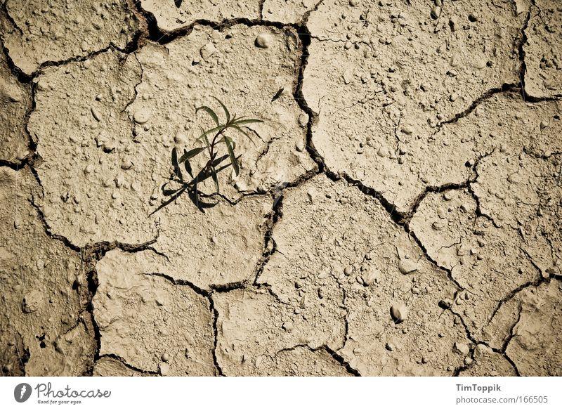 Nature Plant Summer Grass Sadness Warmth Sand Landscape Environment Earth Hope Bushes Desert Hot Drought Desert plant