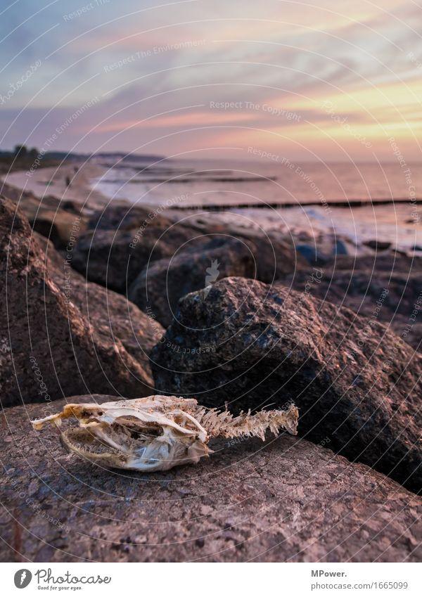 oller fishhead Fish Fish head Beach Stone Dusk Sunset Trash Biogradable waste Skeleton Head Animal skull Clouds Stage Angler Fishing (Angle) Creepy