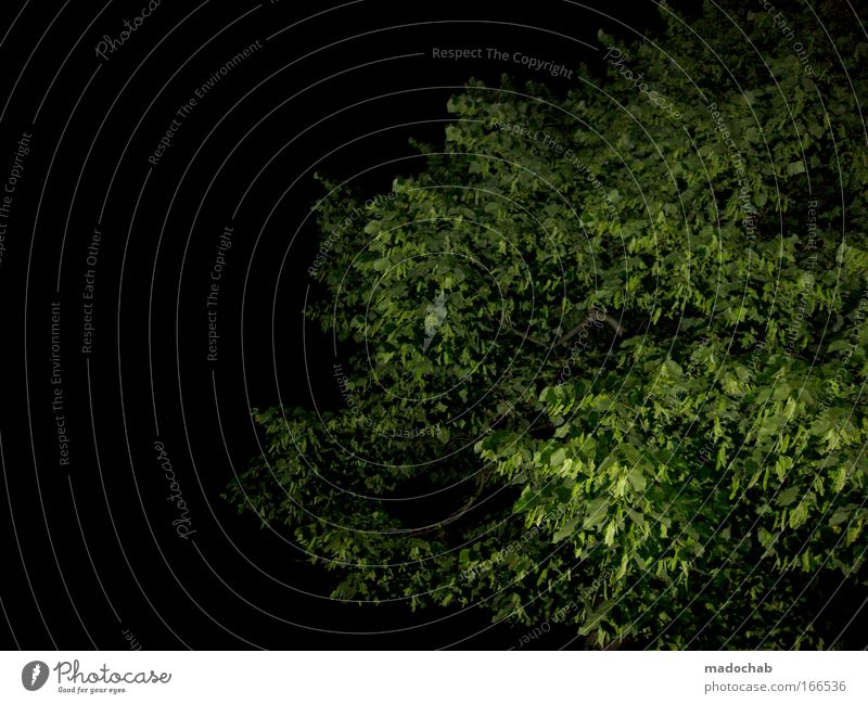 It greenens so green when mado's lightnings glow Deserted Neutral Background Night Flash photo Environment Nature Plant Night sky Tree Foliage plant Green Black