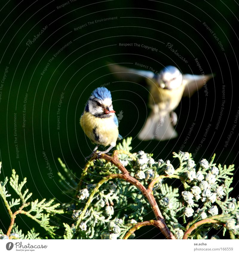 dialogue Colour photo Twilight Blur Motion blur Nature Spring Park Animal Wild animal Bird Animal face Wing 2 Pair of animals Flying Happiness Happy