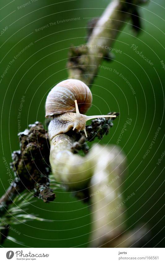 Tree Plant Calm Loneliness Animal Brown Idyll Wild animal Snail Slimy