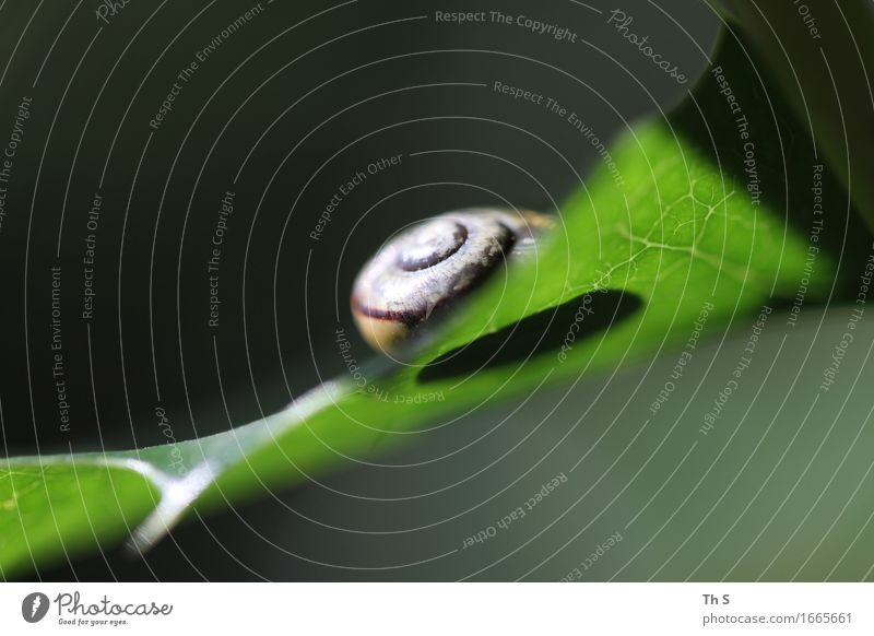 snail shell Environment Nature Plant Spring Summer Leaf Snail Living or residing Esthetic Authentic Simple Elegant Natural Green Serene Patient Calm Idyll