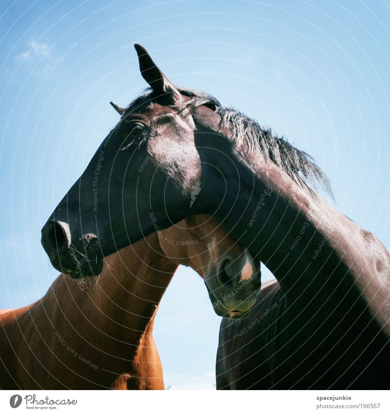 love Colour photo Exterior shot Ride Sky Summer Animal Horse 2 Pair of animals Touch Together To enjoy Elegant Glittering Happy Curiosity Contentment