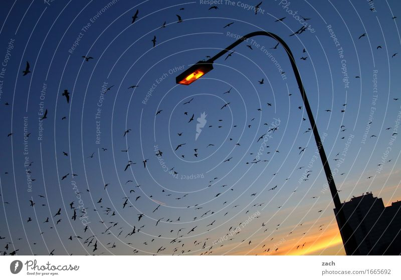 ...how moths can make the light Night sky Sunrise Sunset Beautiful weather Berlin Capital city House (Residential Structure) Lamp post Lantern Animal