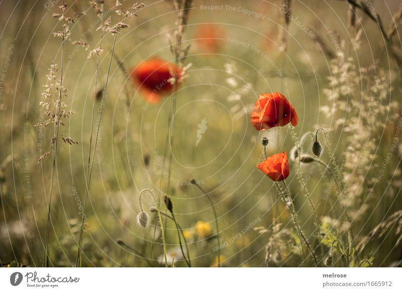Nature City Plant Beautiful Summer Green Colour Flower Relaxation Blossom Grass Natural Style Orange Field Elegant