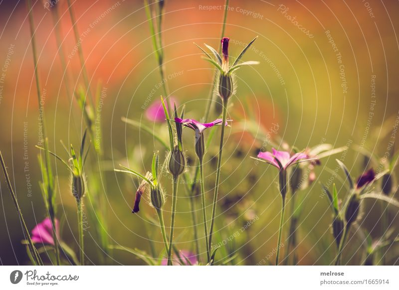 yeahhhhhhhhh summer Elegant Nature Summer Beautiful weather Plant Flower Leaf Wild plant Grass Grass blossom Flowering plant Garden Meadow Dye Play of colours