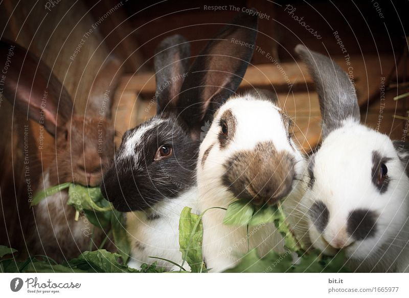 Nature Vacation & Travel Animal Garden Leisure and hobbies Group of animals Soft Easter Agriculture Farm Organic produce Pelt Pet Zoo Hare & Rabbit & Bunny