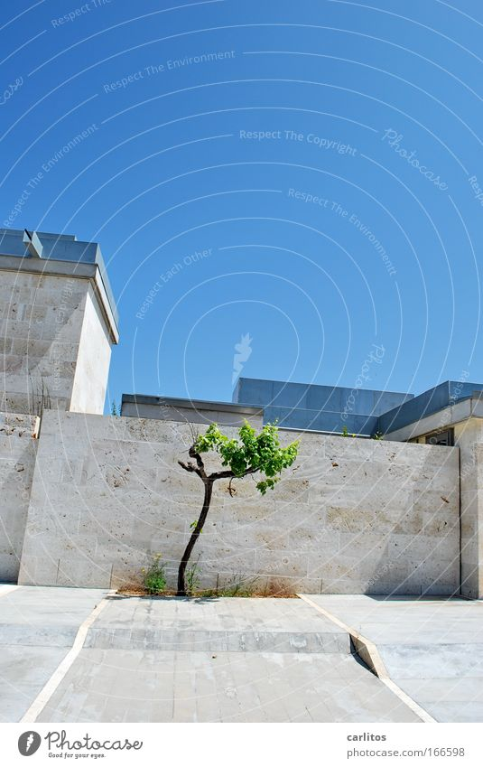 Tree Blue Cold Wall (building) Stone Wall (barrier) Building Architecture Design Elegant Success Facade Safety Modern Protection