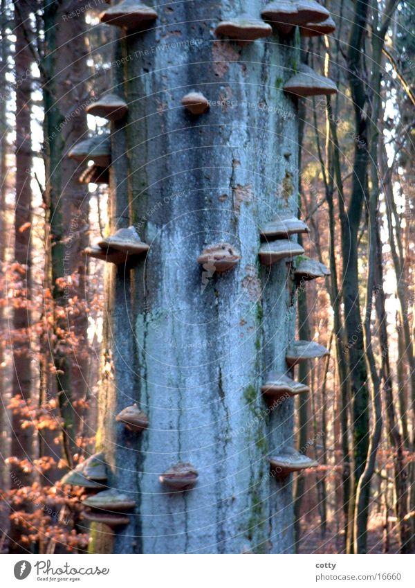 Tree mushrooms 2 Forest Tree fungus Tree trunk