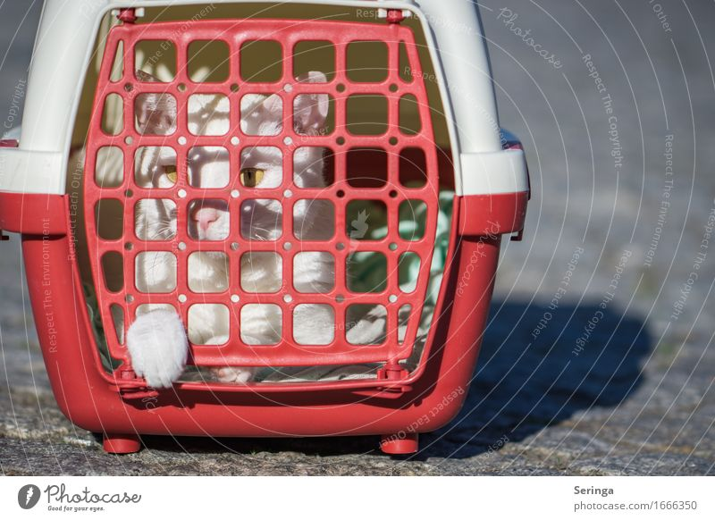 cage posture Animal Pet Cat Animal face 1 Catch Sadness Cage Cat's head Cat's paw Cat eyes Colour photo Multicoloured Exterior shot Detail Copy Space left