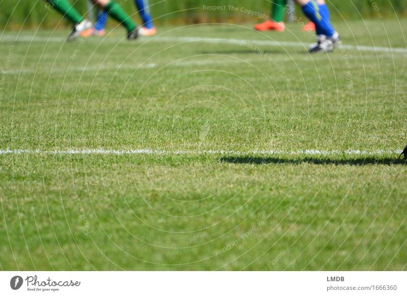The grasses that mean the world I Leisure and hobbies Sports Ball sports Sportsperson Sports team Sporting event Soccer Football pitch Human being Legs Feet 4