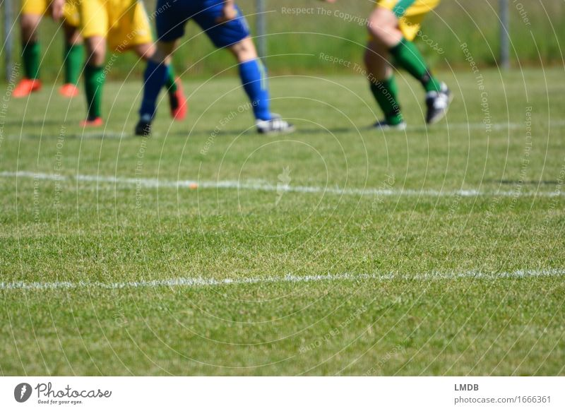 The grasses that mean the world II Leisure and hobbies Sports Ball sports Sportsperson Sports team Soccer Sporting Complex Sporting event Football pitch