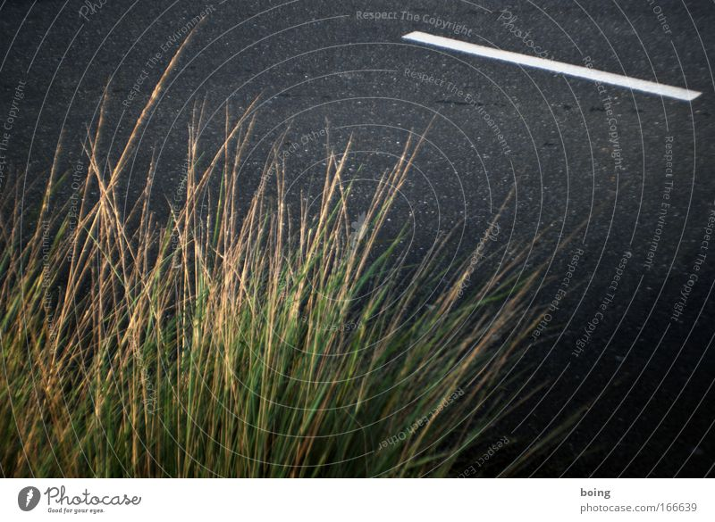 Street Grass Warmth Beautiful weather Gardening Nerdy