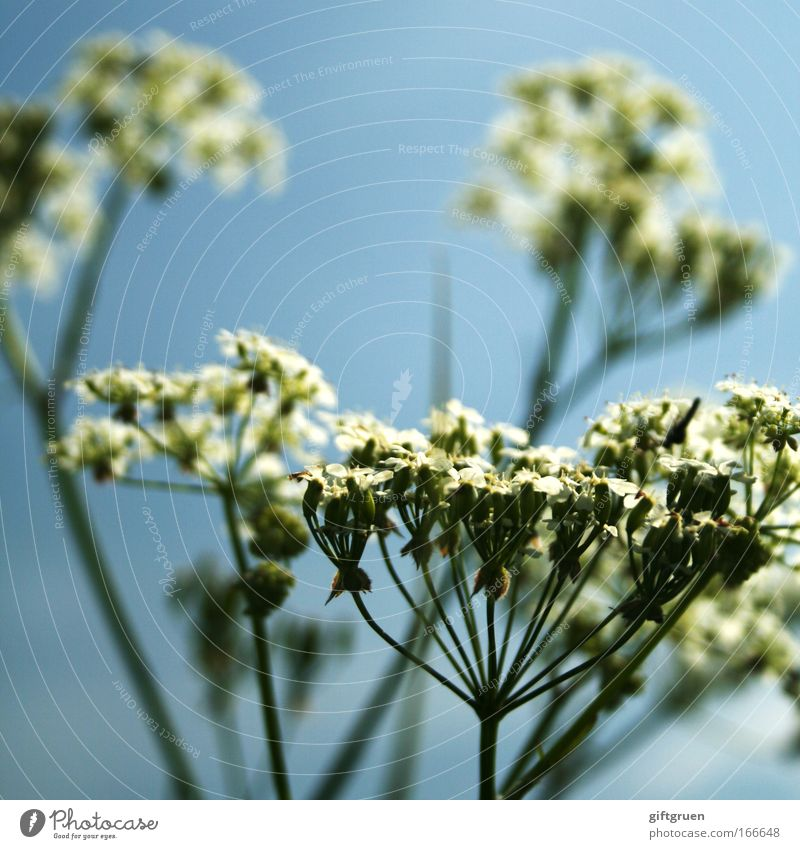 Nature Flower Plant Summer Blossom Spring Environment Growth Blossoming Botany Partially visible Section of image Sky blue Common Yarrow