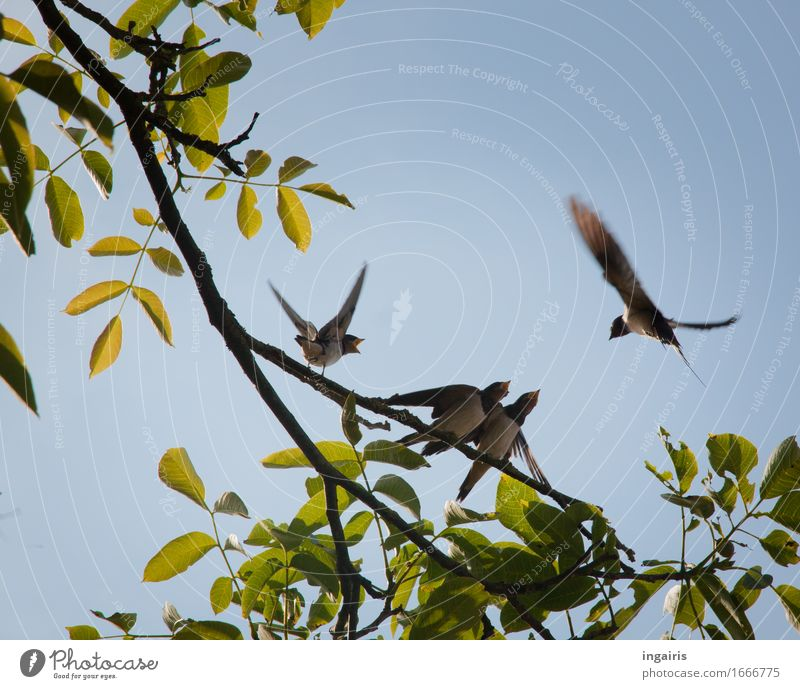 Nature Blue Plant Summer Green Tree Leaf Animal Baby animal Spring Movement Natural Flying Bird Growth Free