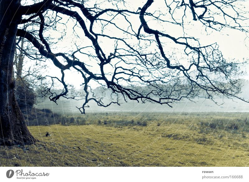 branches Colour photo Subdued colour Exterior shot Deserted Day Environment Nature Landscape Bad weather Storm Fog Rain Tree Meadow Field Threat Dark Creepy