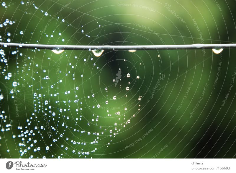 Nature Water Metal Drops of water Network Living or residing Middle Damp Fence Wire Spider Hold Spider's web Highlight Habitat Tense