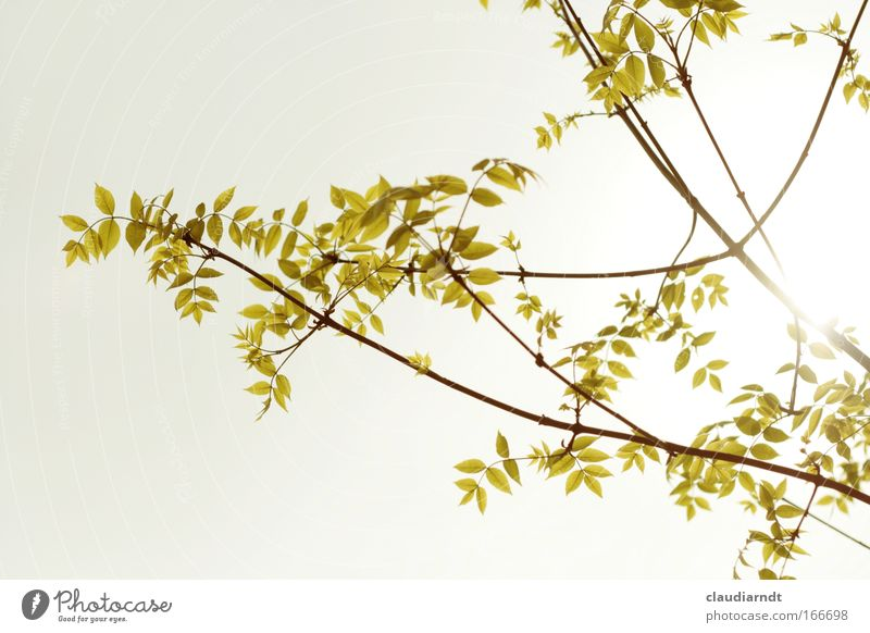 ramified Subdued colour Exterior shot Deserted Copy Space left Copy Space top Copy Space bottom Day Light Contrast Sunlight Back-light Nature Plant Spring Tree
