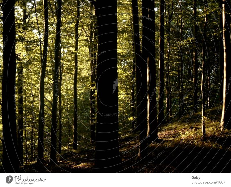 Tree Dark Forest Dangerous Tree trunk Collection Fantasy Eerie Wood flour