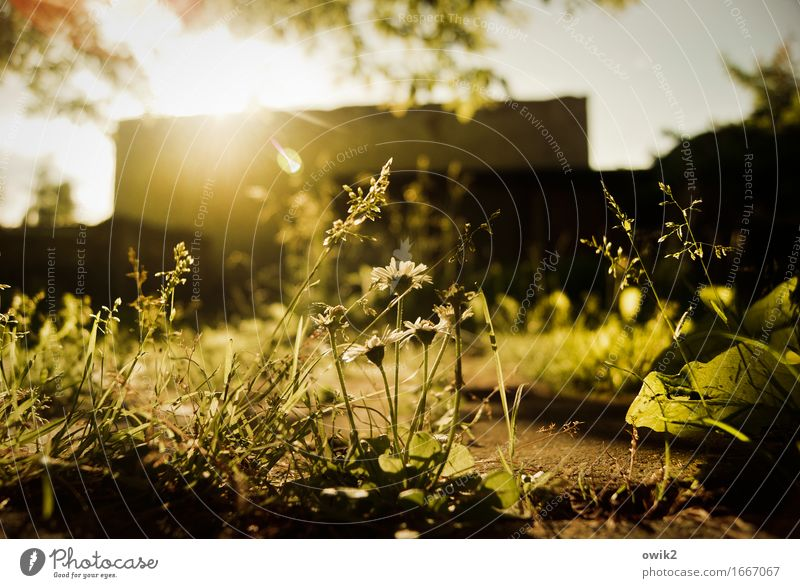 on the ground Environment Nature Cloudless sky Spring Climate Beautiful weather Plant Tree Flower Grass Leaf Blossom Foliage plant Daisy Garden Building