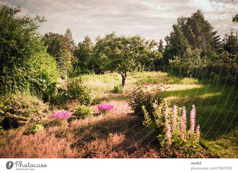 Lots of flowers Environment Nature Landscape Sky Clouds Horizon Climate Beautiful weather Warmth Plant Tree Flower Grass Bushes Leaf Blossom Foliage plant